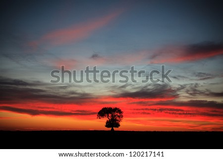 Lone tree at sunset - stock photo