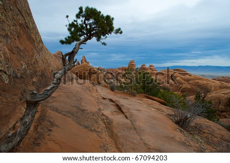 Lone Tree Emerges from Sandstone cliff in Arches National Park, Moab, Utah - stock photo