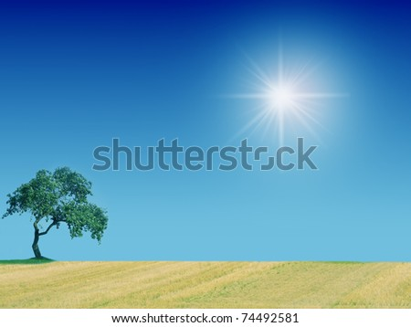Lone tree growing in a grassy field - stock photo