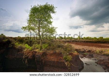 lone tree growing in  Peat Bog near Drumlish, Co.Longford, Ireland - stock photo