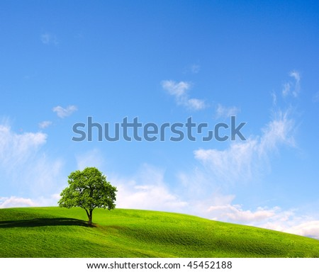Lone tree in a field in sunny day - stock photo