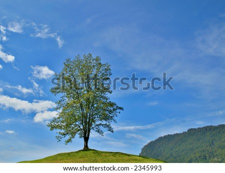 Lone tree in a hill with blue sky and clouds - stock photo