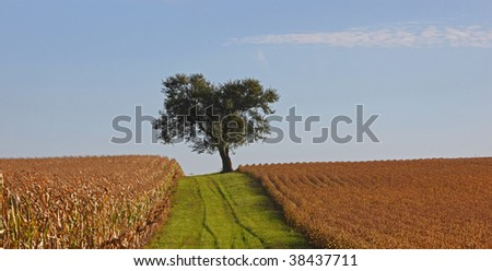 Lone Tree in  farm field - stock photo
