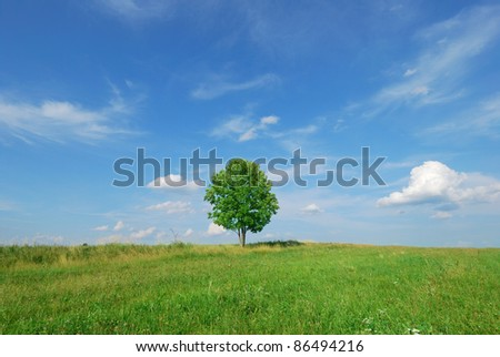 Lone tree in green meadow with blue sky - stock photo