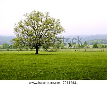 Lone Tree in meadow in front of mountains in Great Smoky Mountains National Park, USA - stock photo