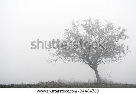 Lone tree in the fog, developed from Raw - stock photo