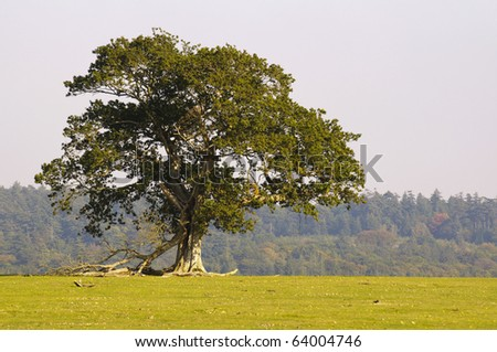 lone tree in the new forest - stock photo