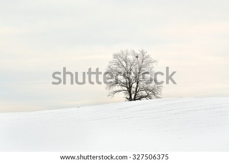 Lone tree in the snow field - stock photo