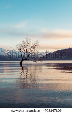 Lone Tree, Lake Wanaka, New Zealand  - stock photo