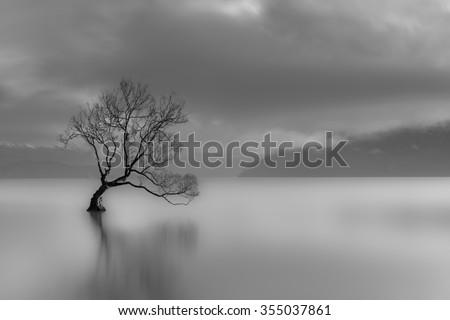 Lone tree, Lake wanaka, New Zealand (black and white) - stock photo