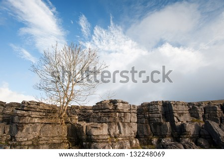 Lone tree Malham Cove in Yorkshire Dales National Park - stock photo