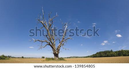 Lone tree needing water in rural setting. - stock photo