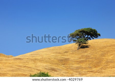 Lone tree on a hill under clear blue sky. - stock photo