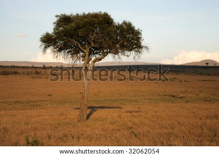 Lone Tree on African Grassland at Sunset