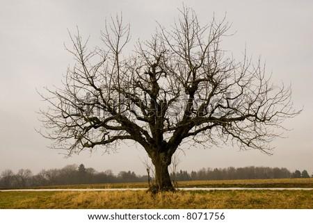 Lone tree on gray winter day. - stock photo