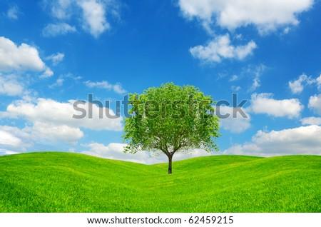 Lone tree on green field - stock photo