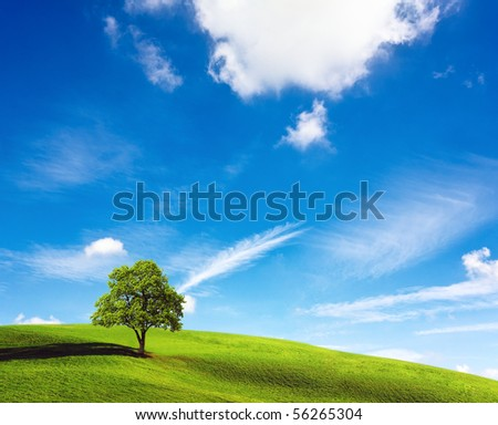 Lone tree on green hill