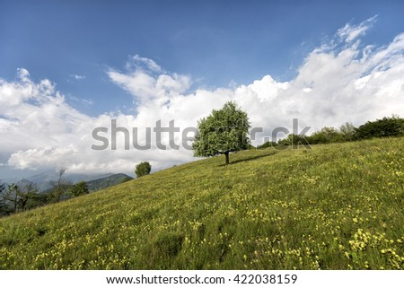 lone tree on the hill in a sunny day with nice white clouds