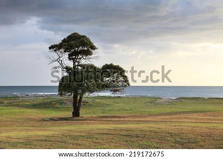 lone tree on the ocean coast. Nicaragua. Coast of the Pacific ocean - stock photo