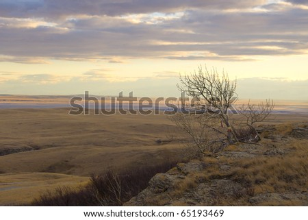 Lone tree on the side of a desert cliff at sunset - stock photo