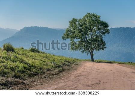Lone Tree Passage - stock photo