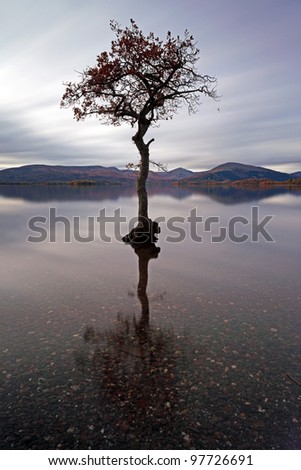 Lone tree reflecting in water with mountains in the distance - stock photo