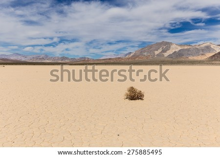 Lone weed on dry lake bed in Mojave desert with cracked mud on a lake floor, blue sky, clouds and mountains. Racetrack Playa. Death Valley national park. California. USA.  - stock photo