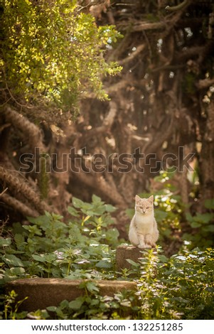 Lone white cat in the forest - stock photo