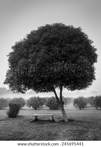 Loneliness solitude  sadness background - lonely tree and seating bench in morning mist fog. Black and white version - stock photo
