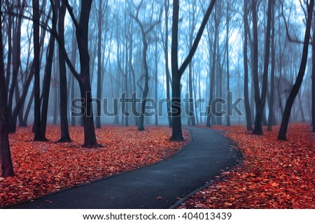 Lonely alley in the park in foggy weather - foggy mysterious landscape in cold tones with bare trees and red fallen leaves on the foreground. Creative filter applied.  - stock photo