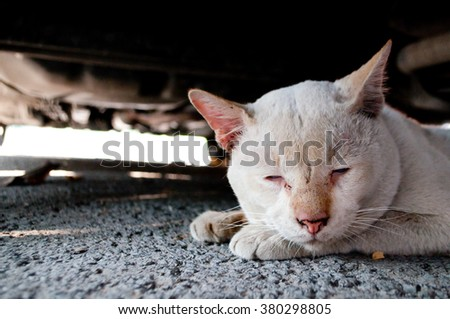 Lonely and sad abandoned old dirty white cat hiding under a vehicle shadow, abstracted looking away with pale blue eyes. Homeless street animal. - stock photo