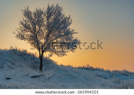 Lonely apricot tree on a hill at winter season - stock photo