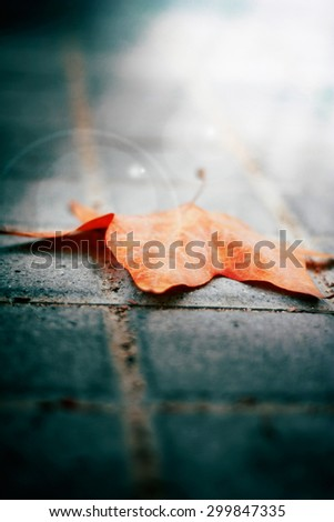 lonely autumn leaf on the pavement . Fall inevitably come. Photo embodies loneliness sadness in my heart . there is hope. toned photo . focus on the sheet. close-up. conceptual photo - stock photo