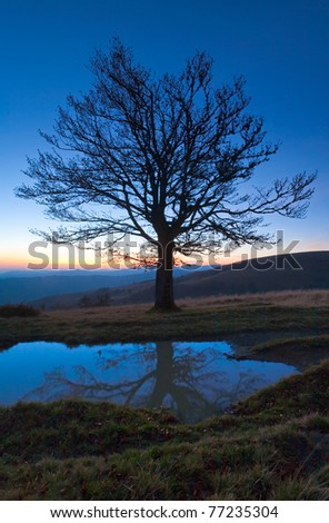 Lonely autumn naked tree on night mountain hill top in last sunset light (and its reflection in a puddle) - stock photo