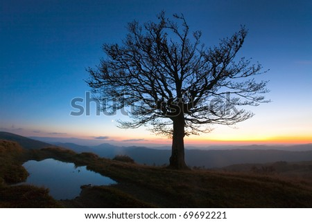 Lonely autumn naked tree on night mountain hill top in last sunset light (and puddle near) - stock photo