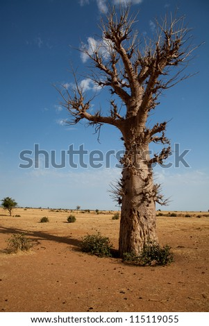 Lonely Baobab in Senegal, Africa - stock photo