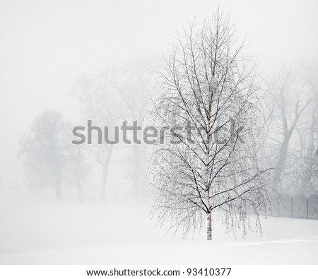 Lonely Birch in the morning mist, in frosty day - stock photo