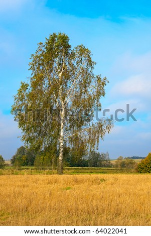 Lonely birch on a stubble field against blue cloudy sky - stock photo