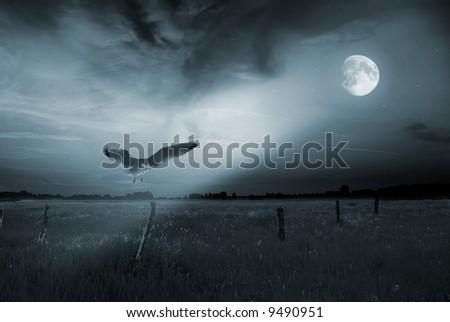 Lonely bird in moonlight - stock photo