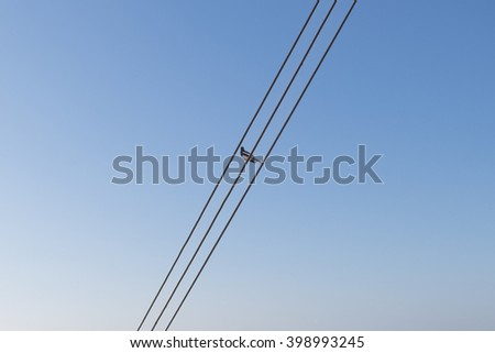 Lonely Bird on cable