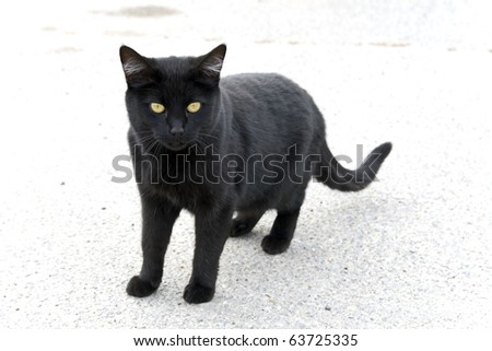 Lonely black cat - stock photo
