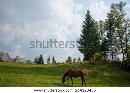 lonely brown horse on green pastures in high mountains - stock photo