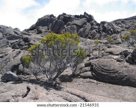 Lonely bush in a volcanic landscape in Reunion Island - stock photo