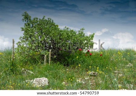 Lonely bush with blossoming red peonies at rainy day - stock photo