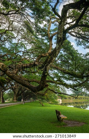 Lonely chair under a huge tree branch at Taman Tasik Taiping or Taiping Lake in Perak, Malaysia. One of Perak and Malaysia main attraction. The first lake garden in Malaysia - stock photo