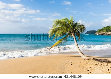 Lonely coconut palm tree on a Pearl beach near village of Deshaies, Guadeloupe, Caribbean - stock photo