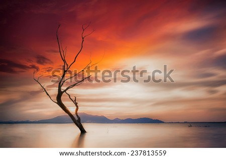 Lonely dead tree. Art nature and sunset - stock photo