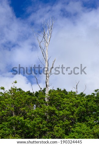 lonely dead tree on sky background - stock photo - stock photo