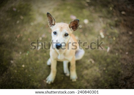 lonely dog - stock photo