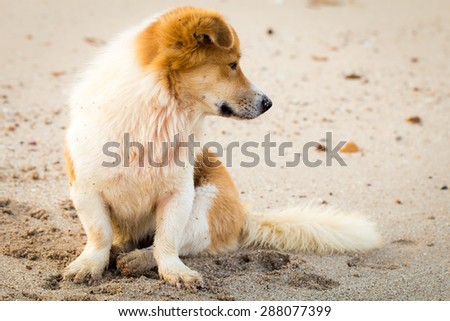 Lonely dog at the beach - stock photo